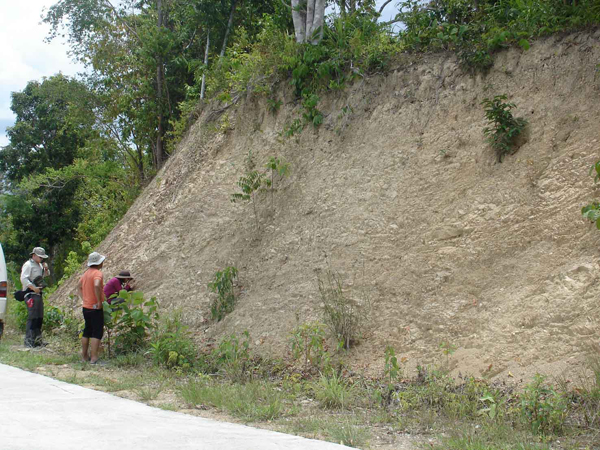 Outcrop of weakly metamorphosed sediments, Central Palawan