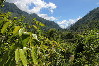 Deeply incised, steep sided valley marking the trace of the major western strand of the Matano Fault, close to its linkage with the Palu-Koro Fault. Sungai Kaleana.