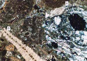 Thin section showing upwards fining redeposited carbonate beds derived from the northern faulted margin of the Tonasa Carbonate Platform. A pre-late Cretaceous quartz mica schist clast (s)  derived from the basement complex is adjacent to an  Eocene Discocyclina (D).